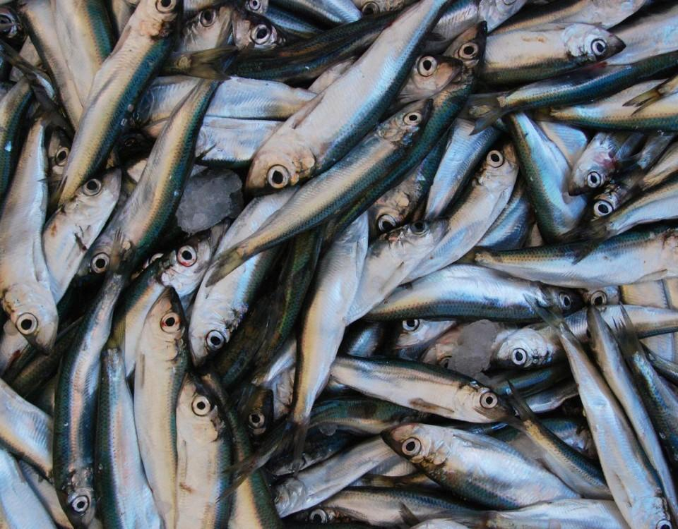 fisk fisk och mera fisk