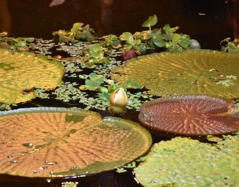 växter i en damm