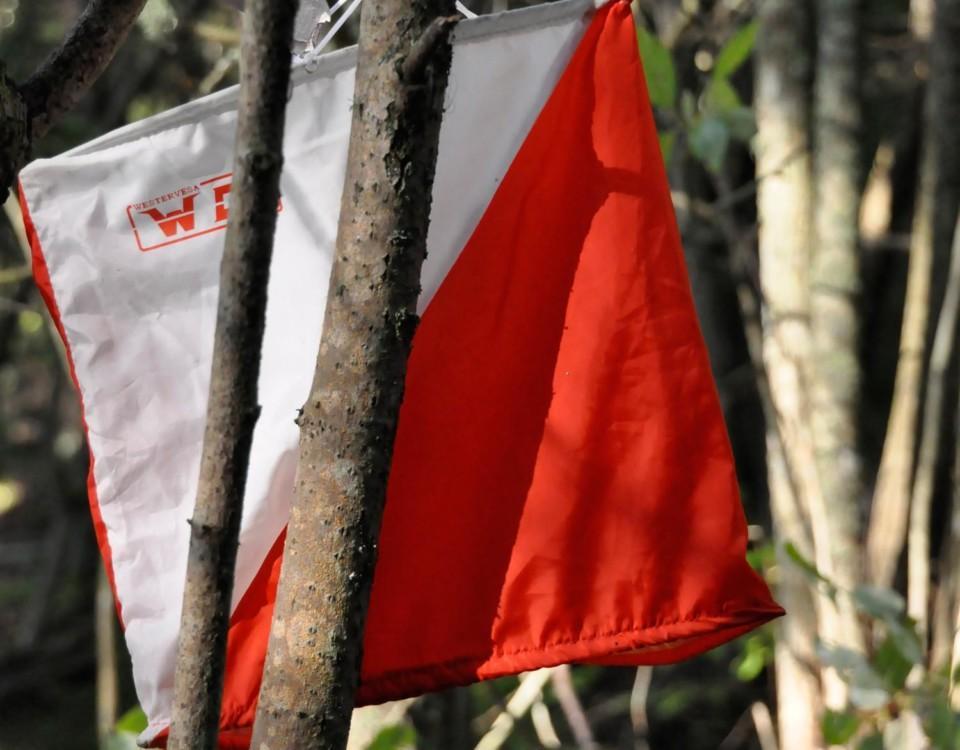 En orienteringsplats i skogen.