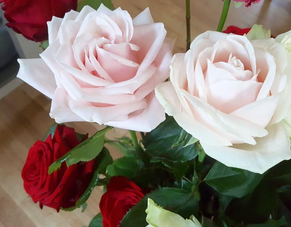 Två ljusröda rosor