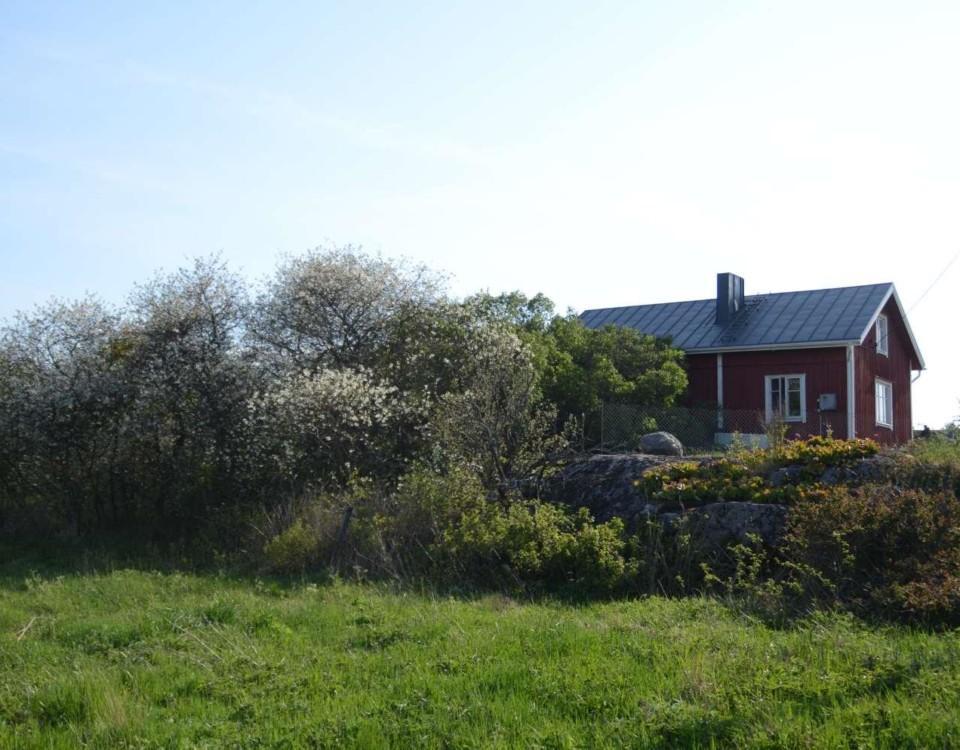 Ett hus med många blommande körsbärsträd.