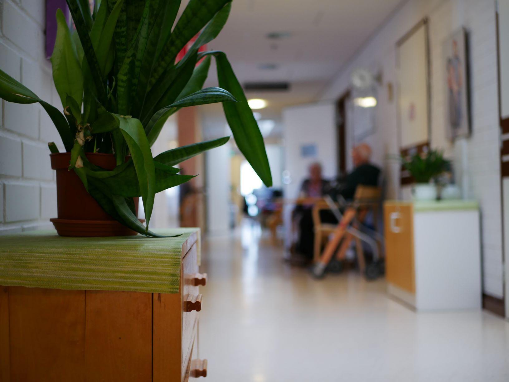 Korridor i älderboende med växt i förgrunden.