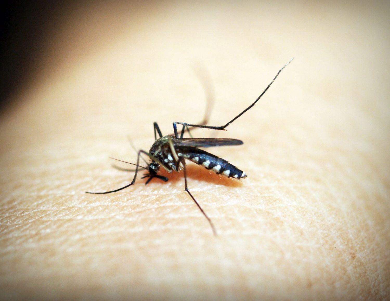 En mygga sitter på en arm.