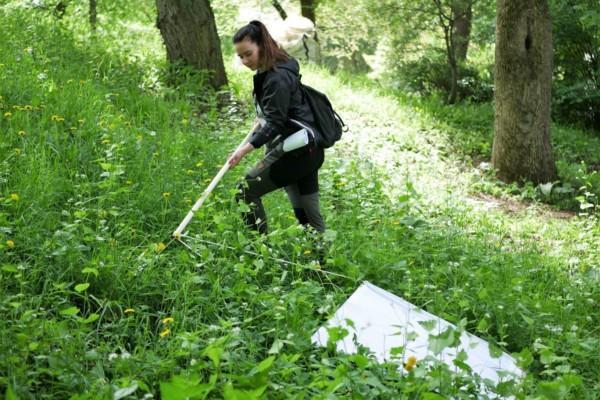 En person drar över gräset med ett vitt tyg