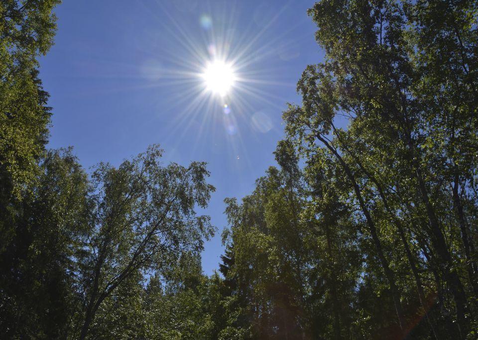 solsken och lövträd
