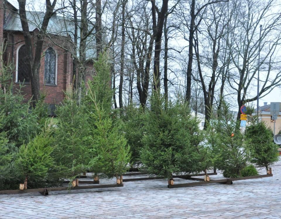 julgranar står på rad