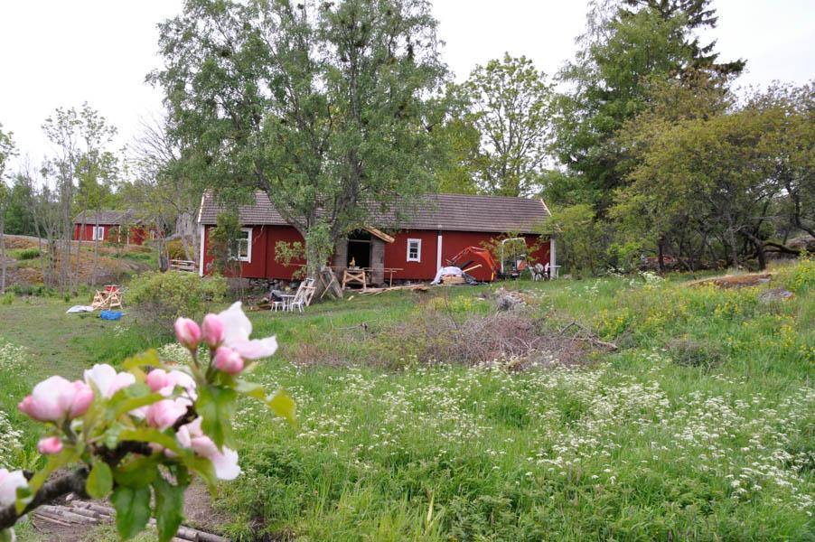 Äppelblom framför ett hus