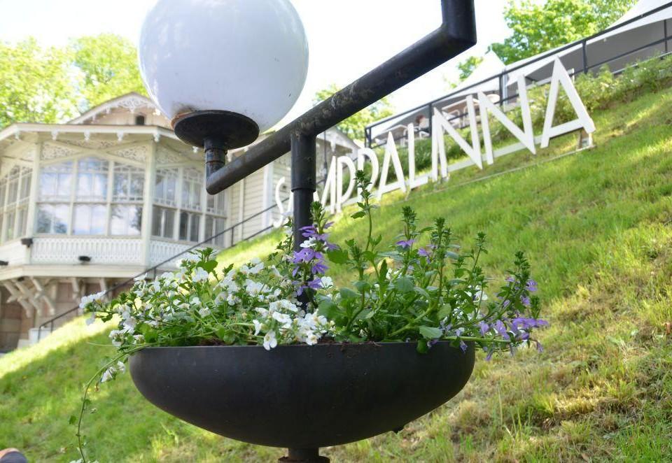 Blomkruka i förgrunden och i bakgrunden gräs och texten Samppalinna.
