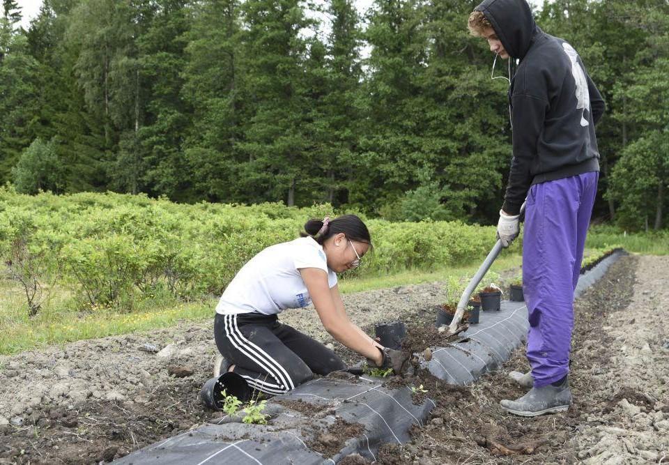 Två ungdomar arbetar på en åker.