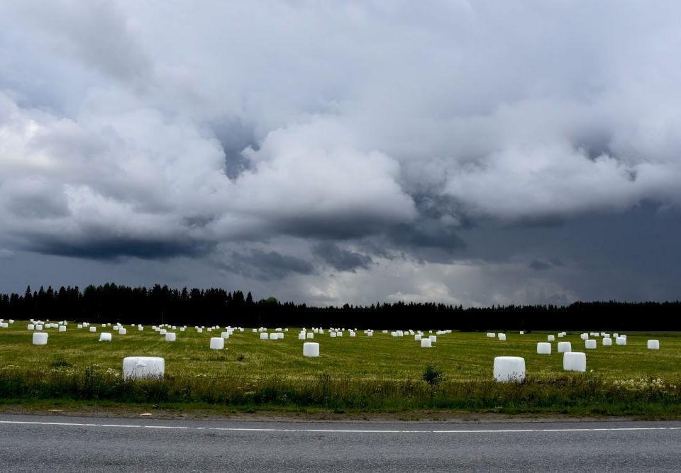 Grön åker med vita höbalar under en molnig himmel.
