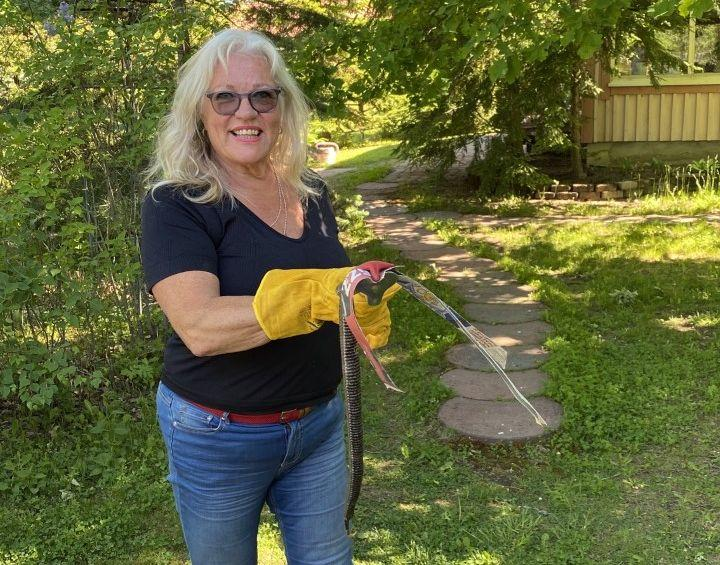 kvinna håller i huggorm med handskar