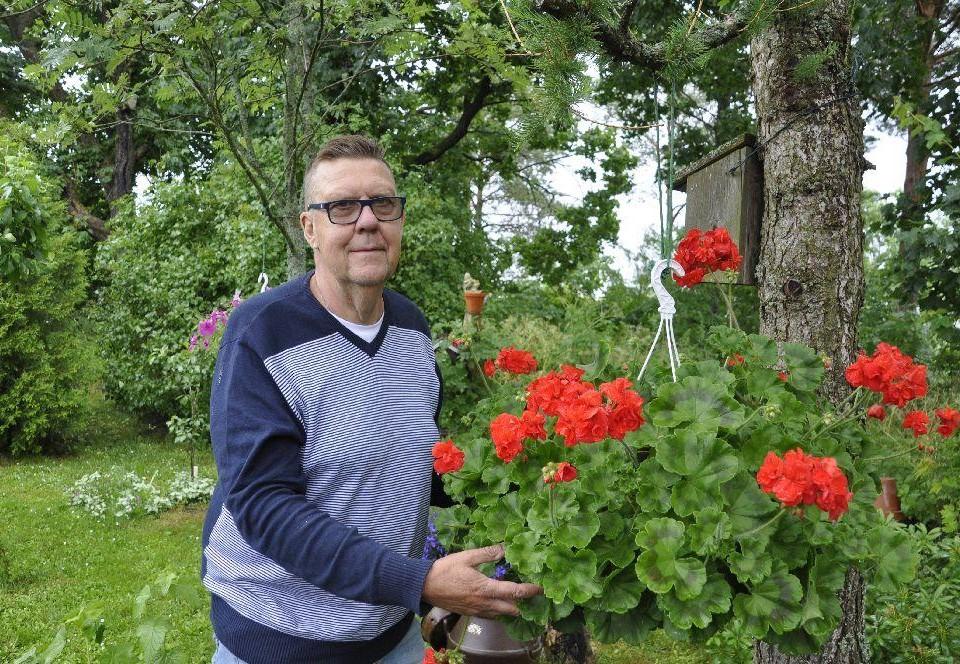 Man i trädgård vid en stor röd pelargon.