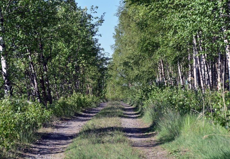 En sandväg genom skogen.