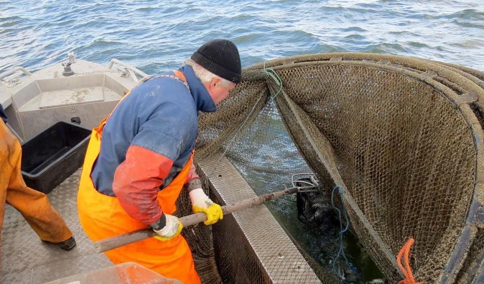 En fiskare vittjar en ryssja