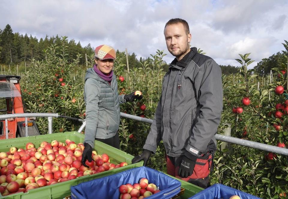 Två persooner på en äppelplockningsvagn. Stora äppellådor framför dem.