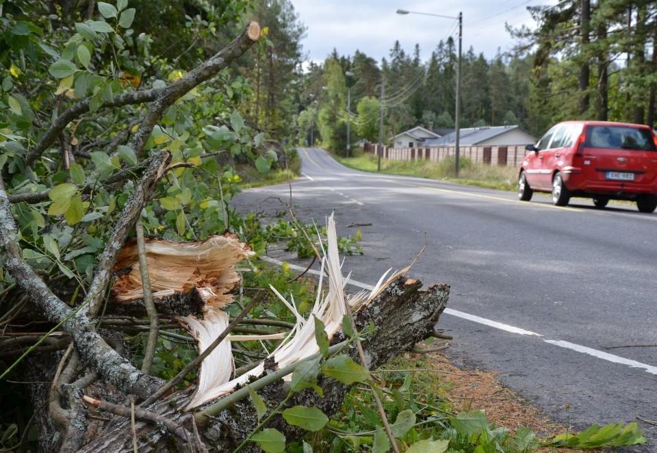 Brustet träd vid landsväg