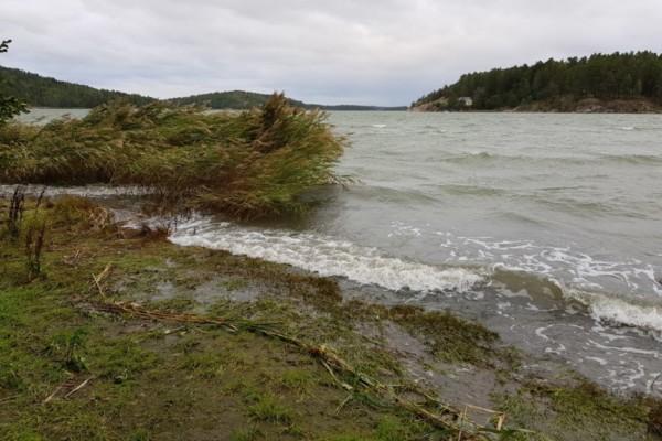 Vågor och vass som lägger sig vid en strand.