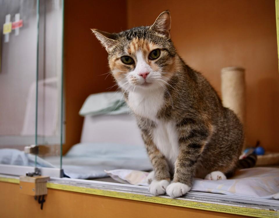 Katt på djurskyddshem