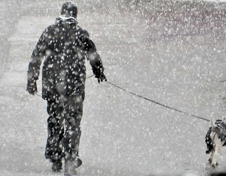 Man rastar hund i snöyra