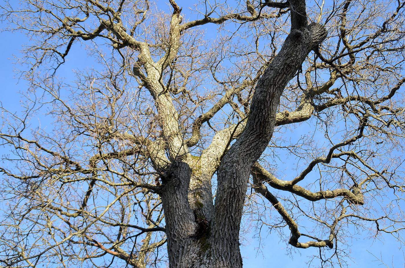 Ett träd utan blad.