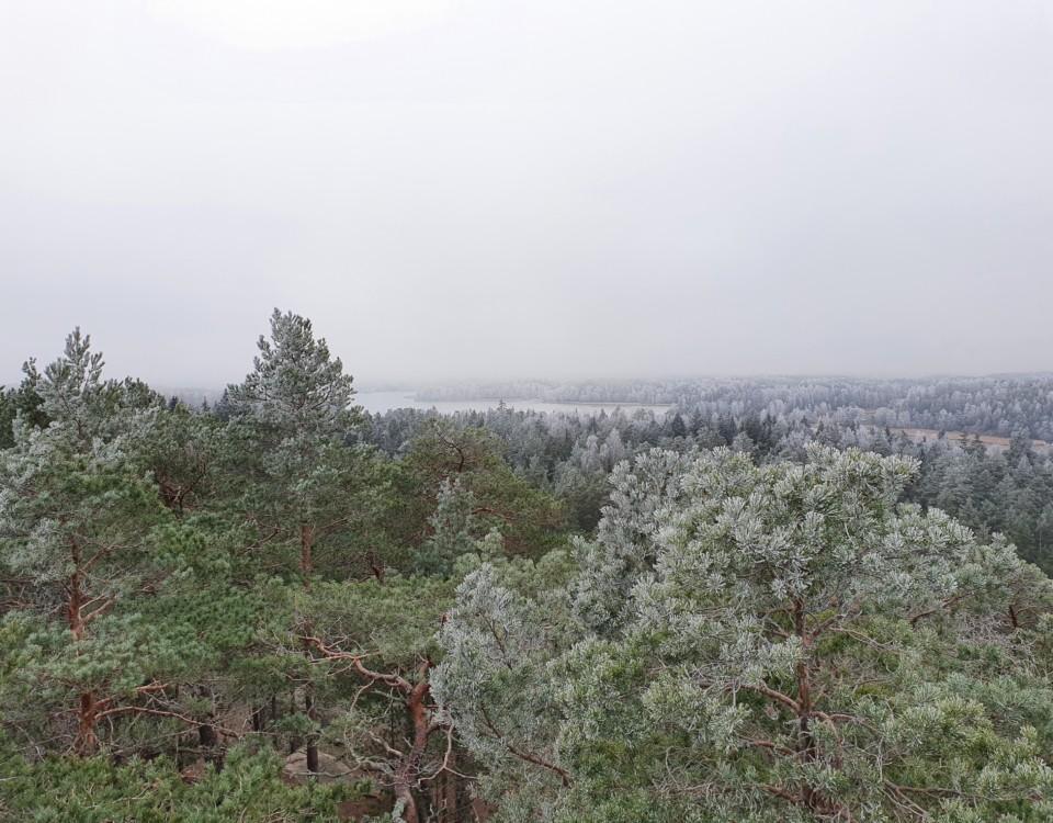 Utsikt över skog.