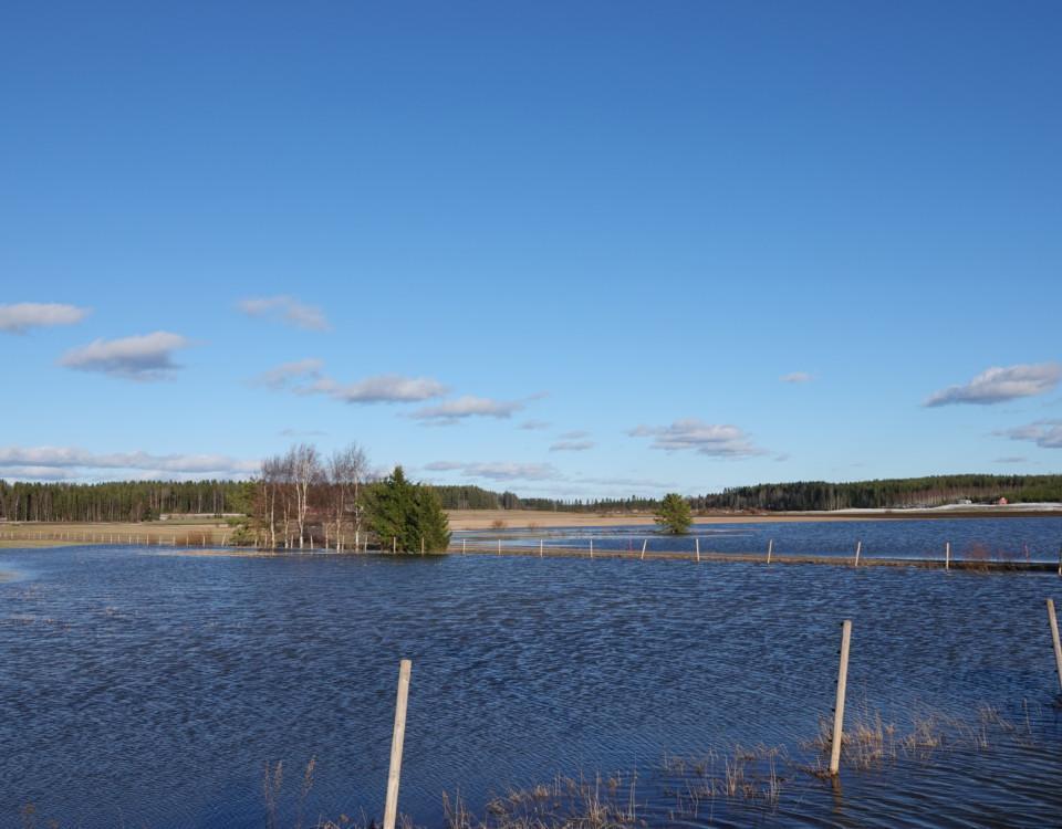 En översvämmad åker.