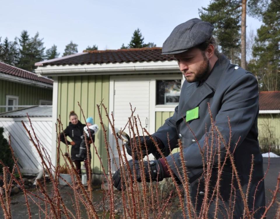 Man inspekterar buske