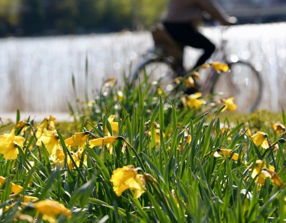 Blommor med en cykel i bakgrunden.