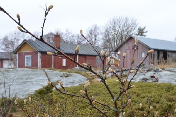 Gamla rödamålade hus.