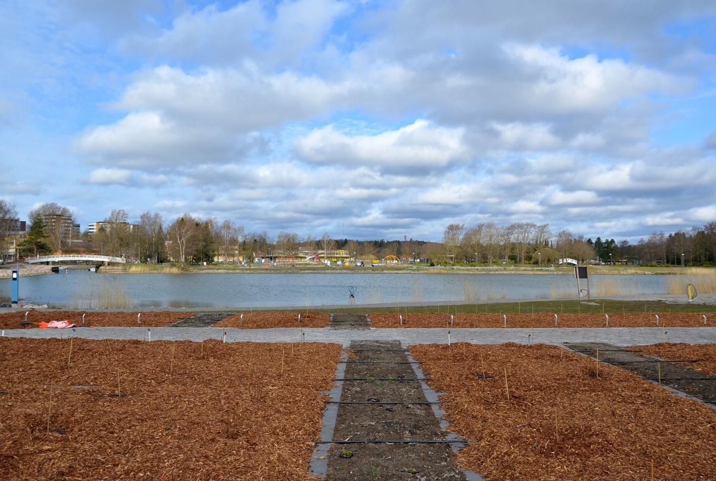 en park som nyligen planterats vid vattenbrynet
