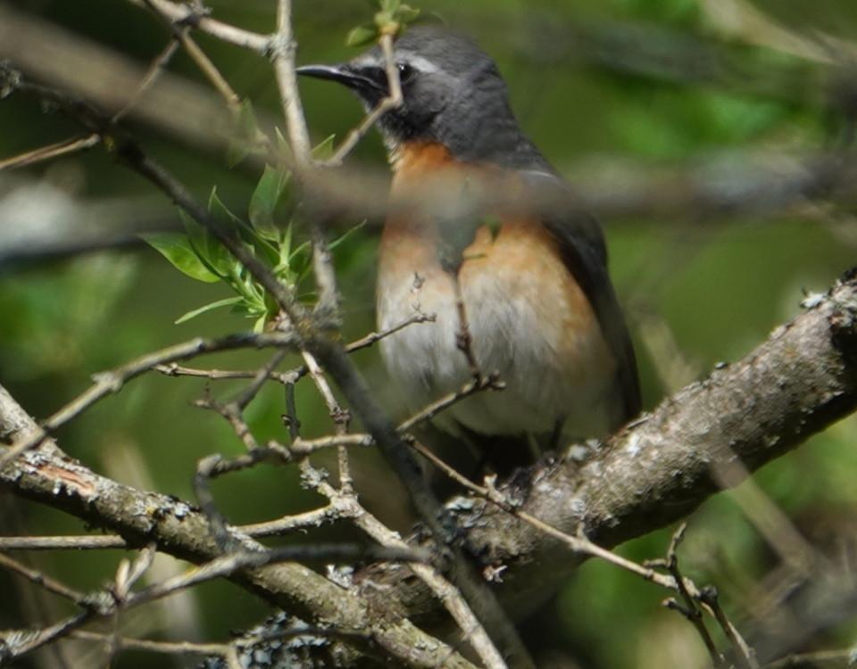 En liten fågel i en buske.