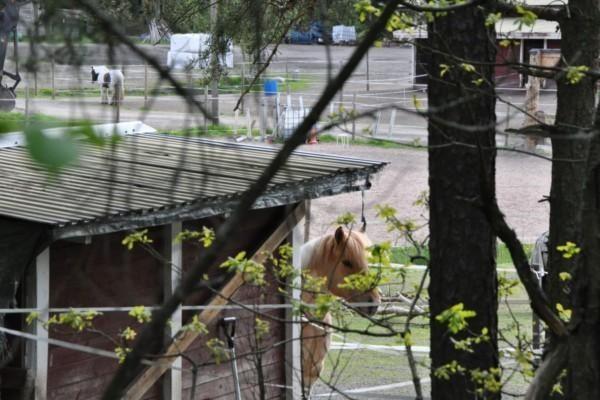 Häst står vid stall