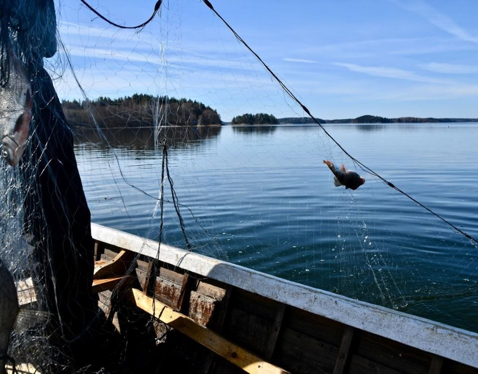 En man i en båt som tar upp nät.