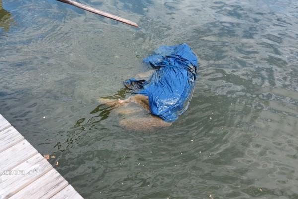Ett dött hunddjur invirat i plast flyter i vattnet bredvid en brygga.