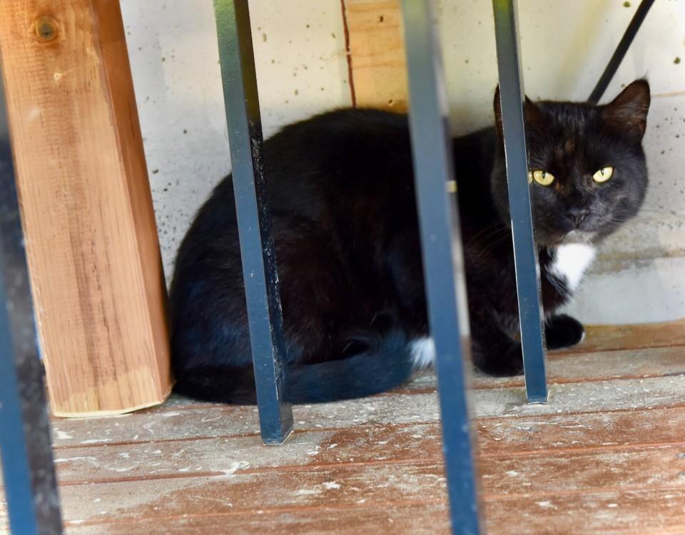 En svart katt bakom galler.