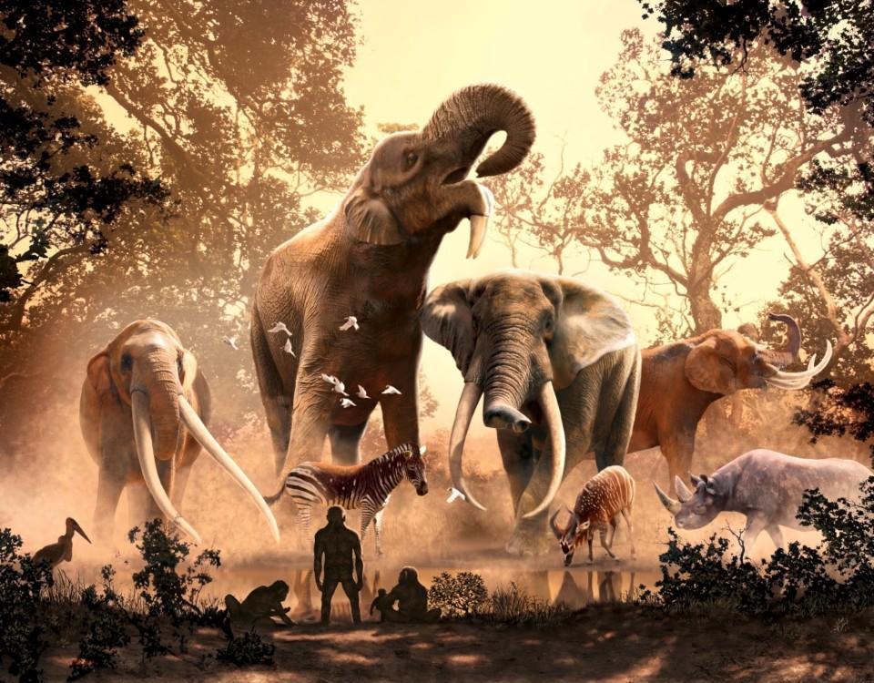 Elefanter och människor på bild.