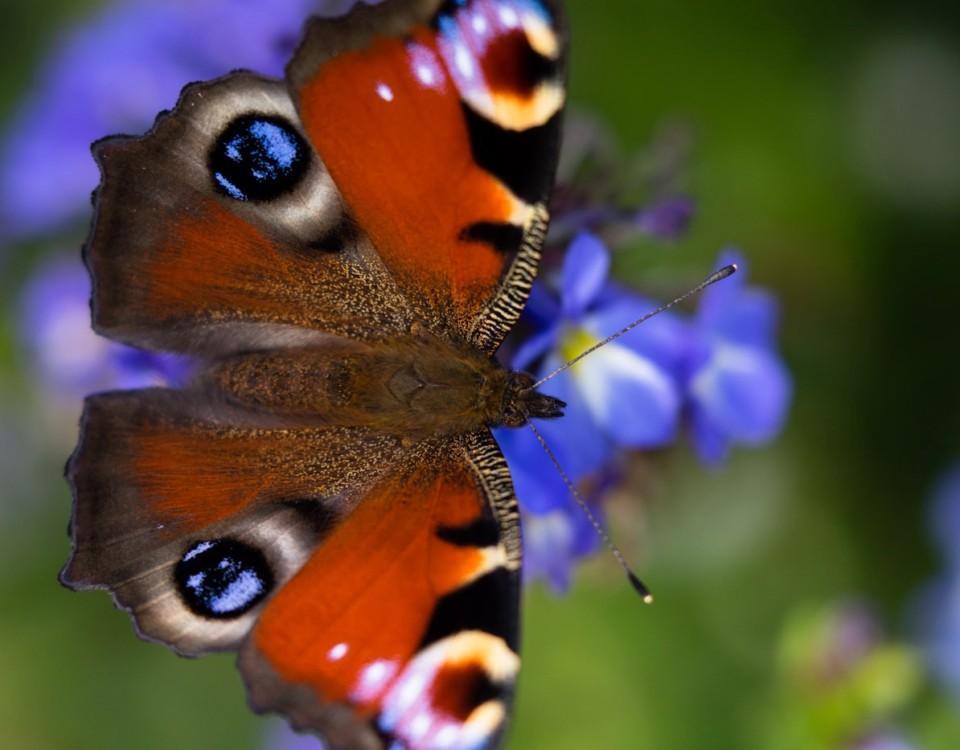 En fjäril.