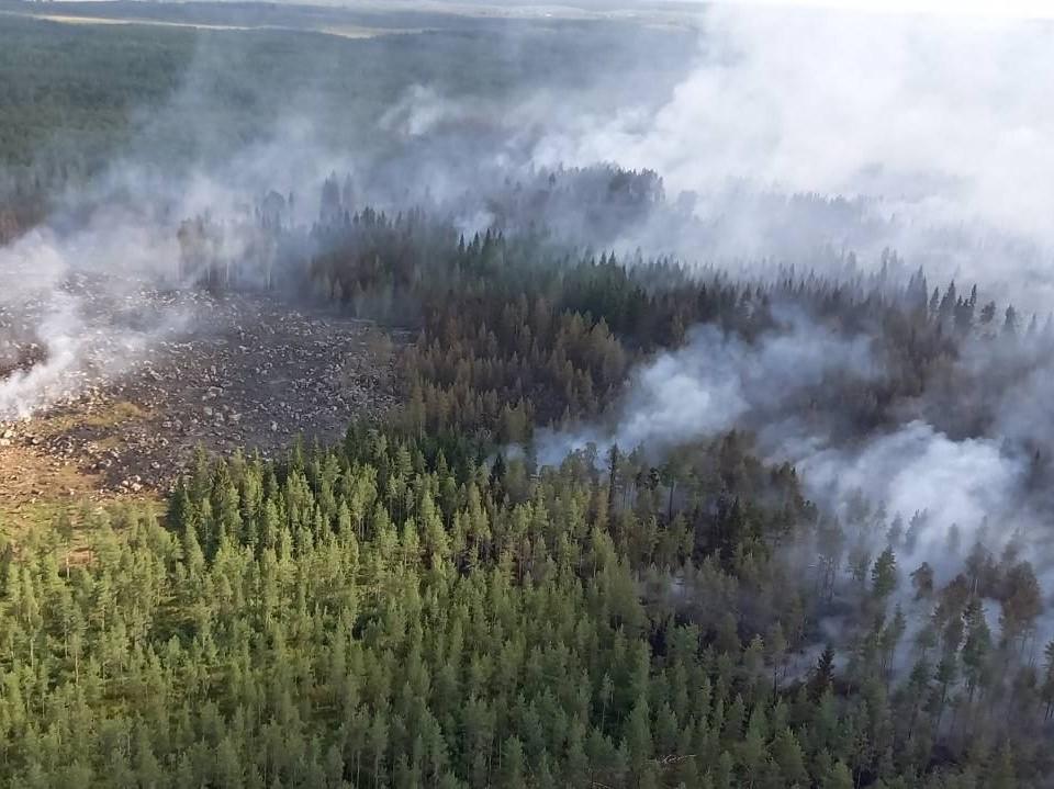 En skog fotad uppifrån. Massor med rök stiger upp från skogen.