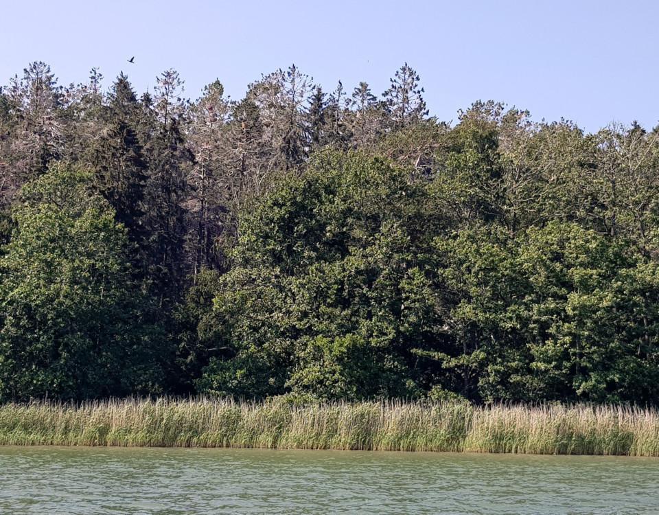 skog som skadats av skarvens närvaro
