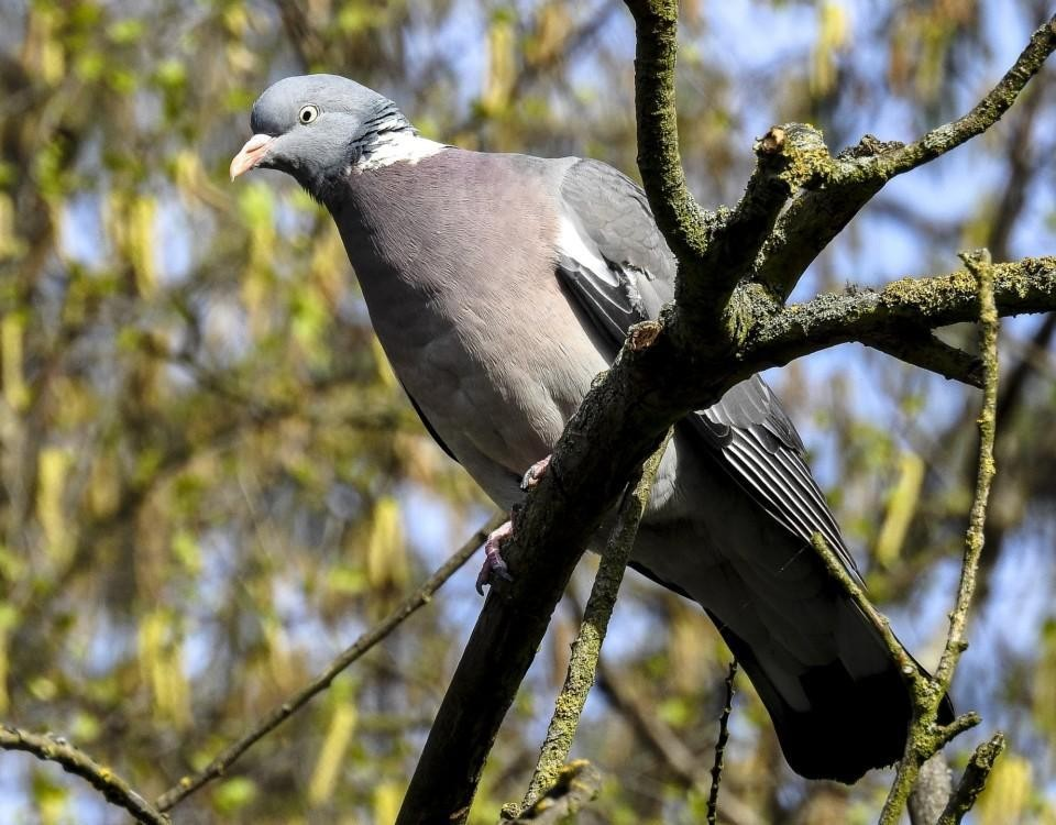 En fågel som sitter i ett träd.