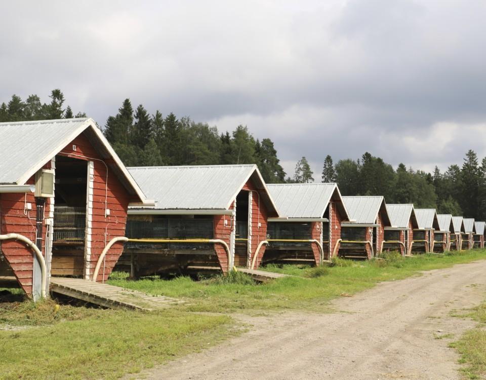 Minkfarm.
