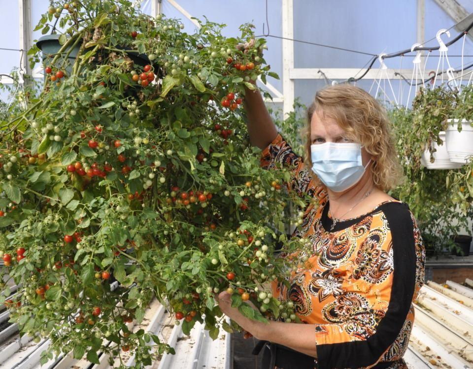 Dam håller i en stor ampeltomat med små tomater