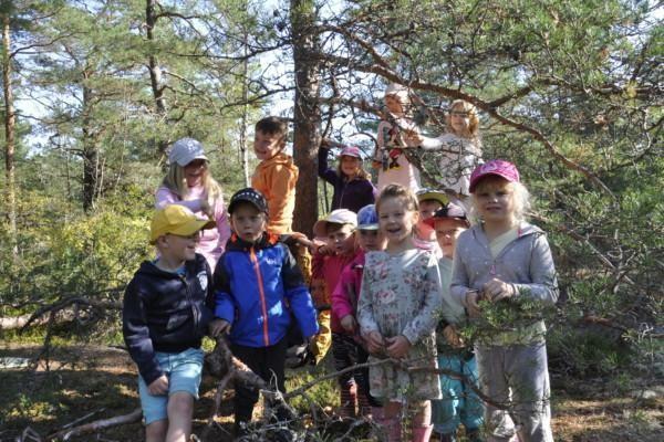 En grupp barn kring en tall i en skog