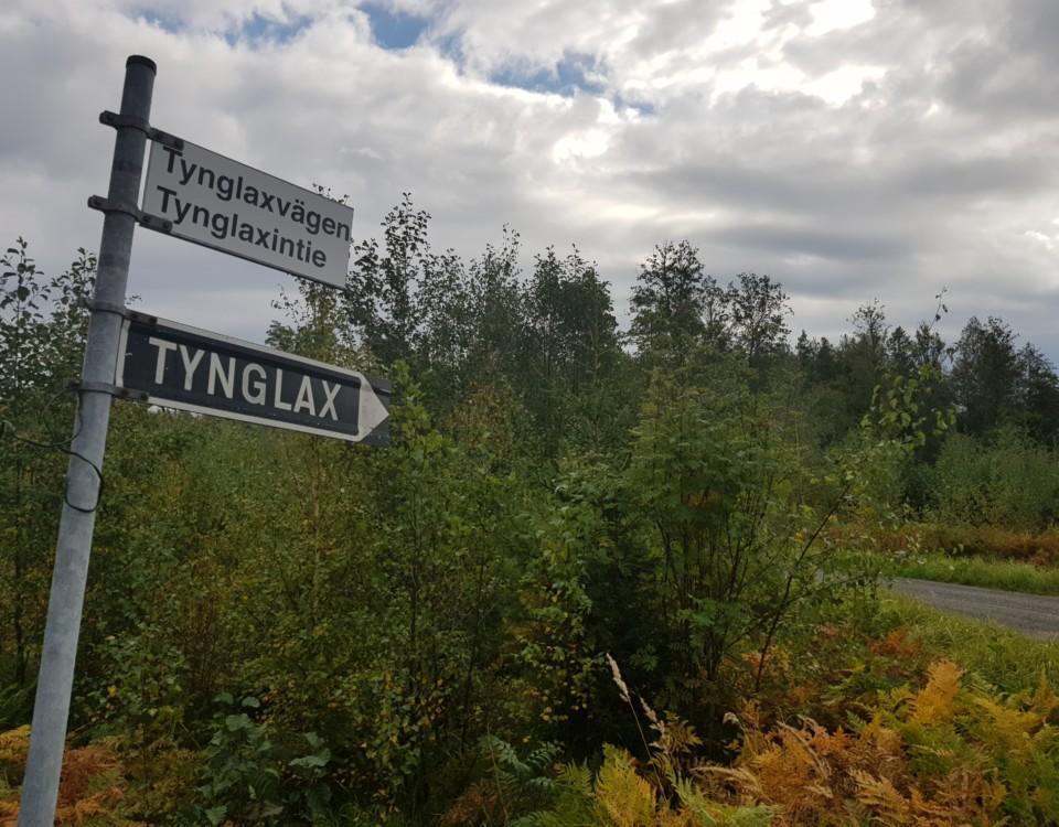 Vägskylt vid skogsdunge med texten Tynglax/Tynglaxvägen