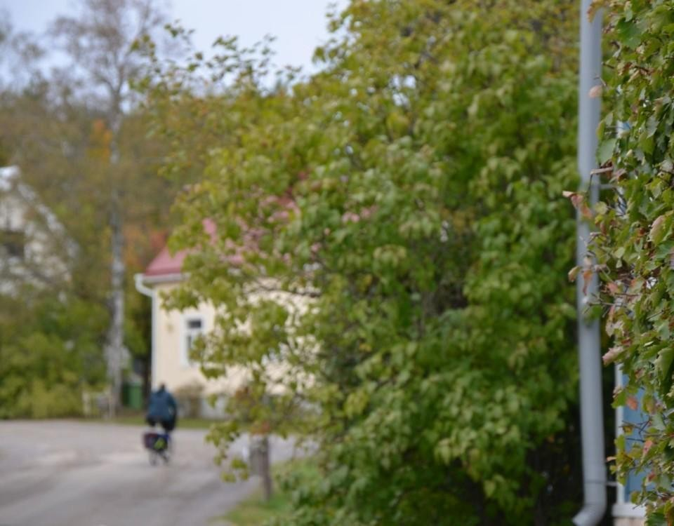 Cyklist på gata i lummigt trähuskvarter